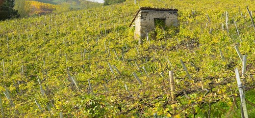 Vineyards on a farm in Getaria, Gipuzkoa