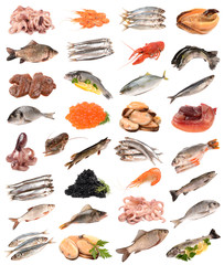 collection of of fish products