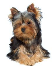 Adorable and charming dog