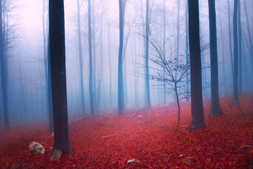 Fantasy colorful foggy forest