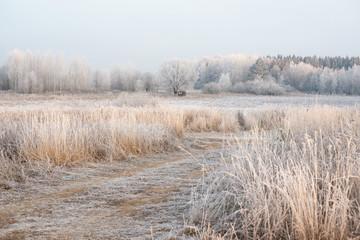 Дорога к замёрзшему пруду