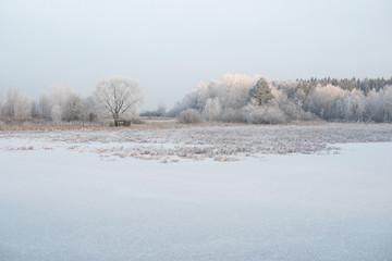 Замёрзший пруд зимой