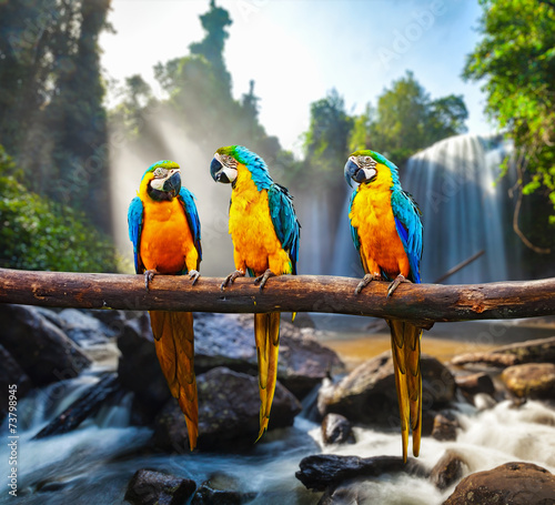 Foto op Canvas Papegaai Blue-and-Yellow Macaw Ara ararauna