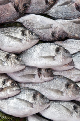 Pile of silver colored fish