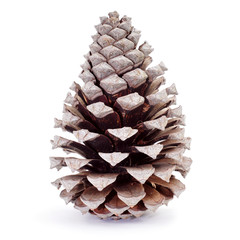 dried pine cone