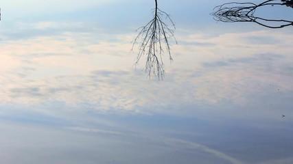 riflesso di albero e nubi nell'acqua
