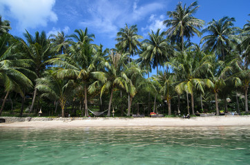 Lovely Beach with Turquoise Water and Green Palm Trees on a Trop