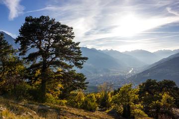 Albero e alberi in montagna in autunno