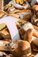 porcini mushrooms harvest in wodden bowl