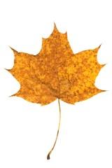 blatt_leaf_29