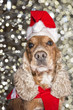 Santa dressed puppy dog christmas xmas