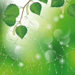 Spider web with leaves