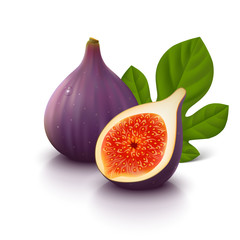 Figs fruit on white background. Vector illustration.