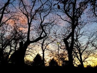 夕暮れ時の木々