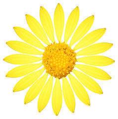 A yellow sunflower