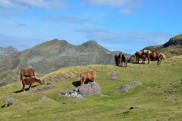 Mountain pass with horses in the French Pyrenees