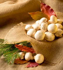 Champignon with autumn leaves and spruce branches