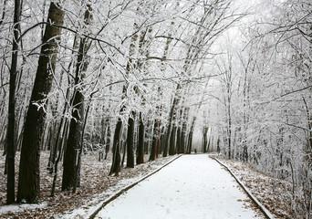 Walkway in snowy city park