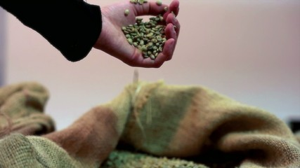 Hand touching coffee beans inside the jute bag