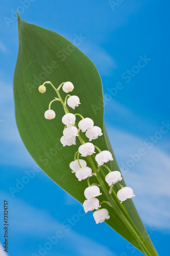 Poster Lelietje van dalen Lily of the valley on the blue sky