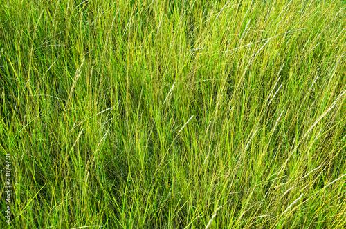 canvas print picture Gras auf der Düne