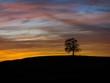 canvas print picture - Alte Eiche im roten Sonnenuntergang