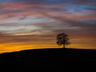 Alte Eiche im roten Sonnenuntergang