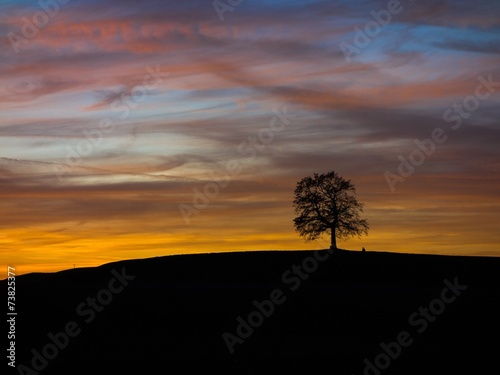 canvas print picture Alte Eiche im roten Sonnenuntergang