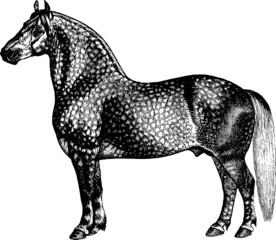 Vintage Illustration horse percheron