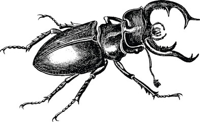 Vintage graphic stag-beetle