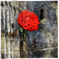 red rose in old door, artistic picture