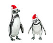 Funny penguins with santa