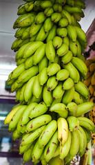 Green bananas Musa