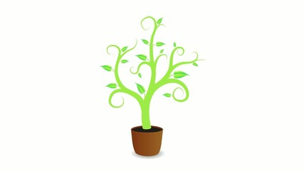 Growing plant in a pot on white background.