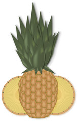pineaple vector isolated