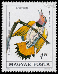Stamp printed in Hungary shows northern flicker