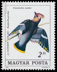 Stamp printed in Hungary shows Bohemian waxwing