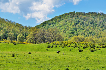 Horses on a green mountain meadow. Italy