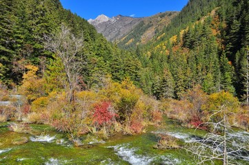 Landscape of streaming water and trees at Jiuzhaigou