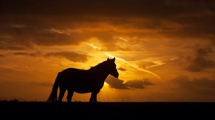 Wildpferd im Sonnenuntergang