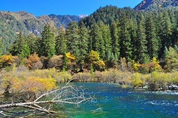 A creek with colourful autumn plants and trees at Jiuzhaigou