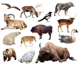 Set of bison and other european animals. Isolated on white