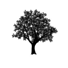 silhouette of the olive tree with leaves