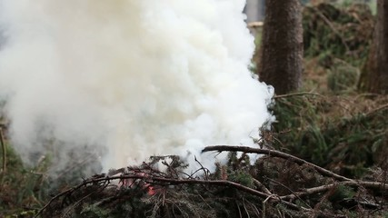 Burning spruce branches and rising smoke. Cleaning the forest