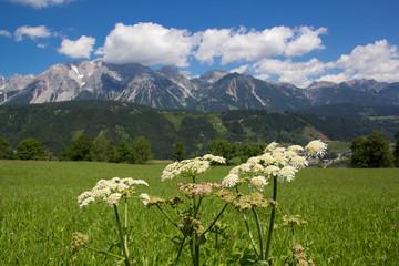 Urlaub am Dachstein - Schladming
