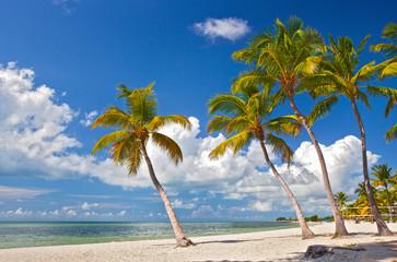 Tropical summer paradise in Miami Beach Florida