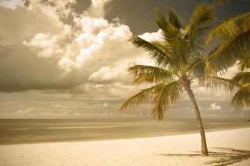 Miami Beach Florida,  palm trees by the ocean