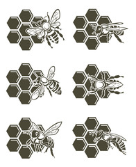 set of design with bee and of honeycomb
