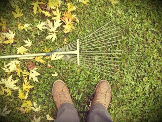 Autumn backround rake leves