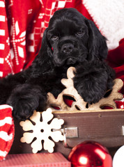 puppy  Cocker Spaniel and  Vintage gift box